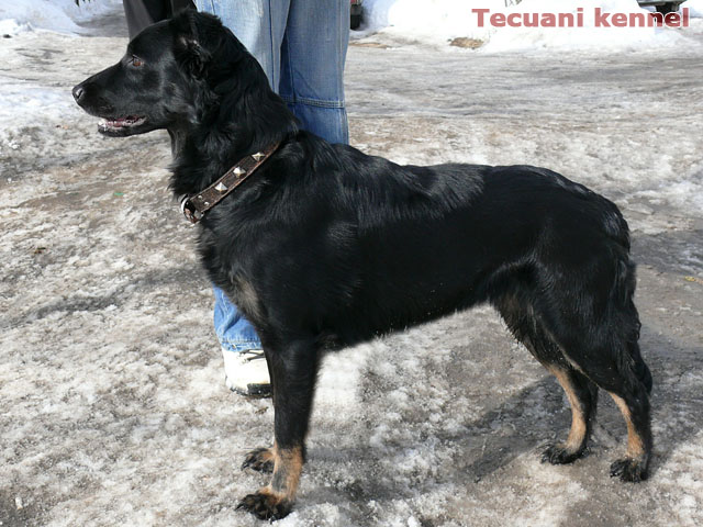 http://www.tecuani.ru/image/litter-z/01.jpg
