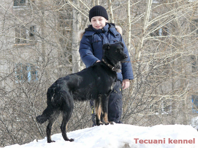 http://www.tecuani.ru/image/litter-z/03.jpg